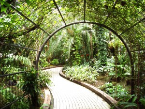 Kyoto_Botanical_Garden_-_inside_conservatory